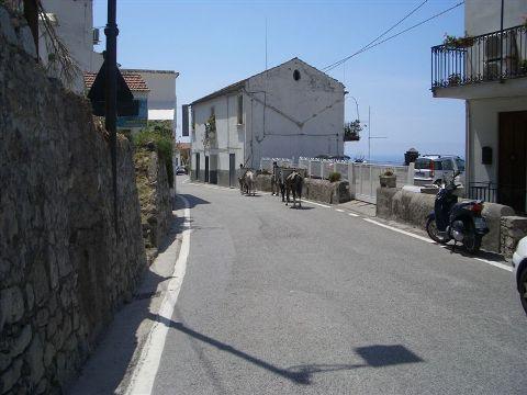 Praiano donkeys